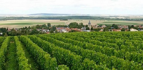 10 aout / august 2014 - Boulard Champagne Vineyards - Before the harvest