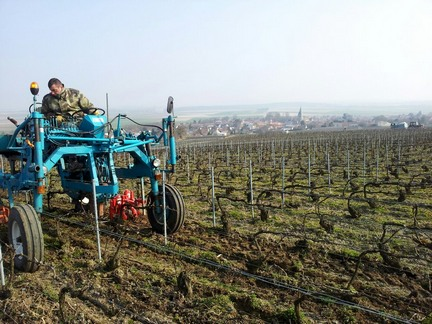 Champagne vineyards - soft ploughing - labour de printemps
