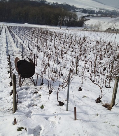Champmagne vineyard - Neige - Snow - Mars 2013