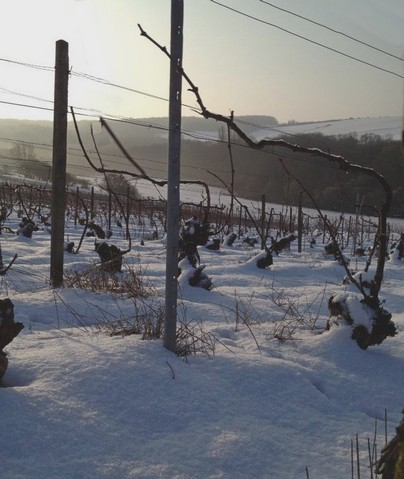Neige - Snow - Champagne Vineyard - 2013 Mars