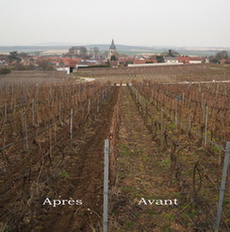 Champagne - labour de printemps - spring ploughing in the vineyards