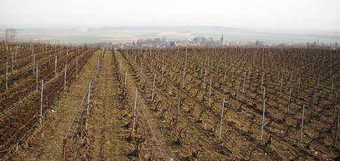 Champagne - Spring works in the vineyards - ploughing - Griffage de printemps - vigne Les Rachais