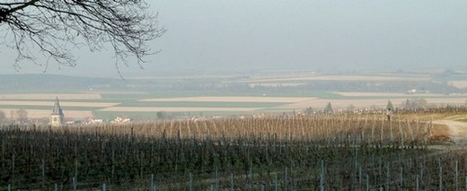 Champagne - Beginning of March - Massif de Saint Thierry area