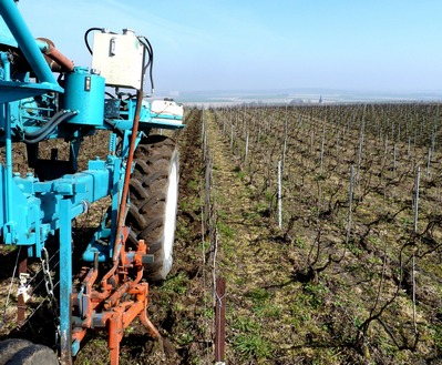 labour de printemps - soft ploughing in the vineayrds - champagne