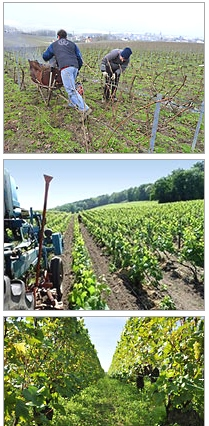 Champagne Francis Boulard & Fille - our Organic Vineyards