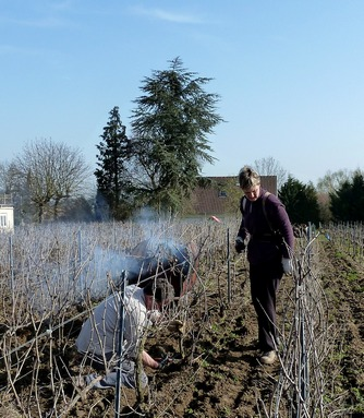 Fin de taille - End of pruning time - Champagne