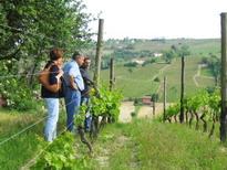 [Italie] - Les vignobles et caves du Piémont Bera4