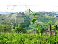 [Italie] - Les vignobles et caves du Piémont Bera5